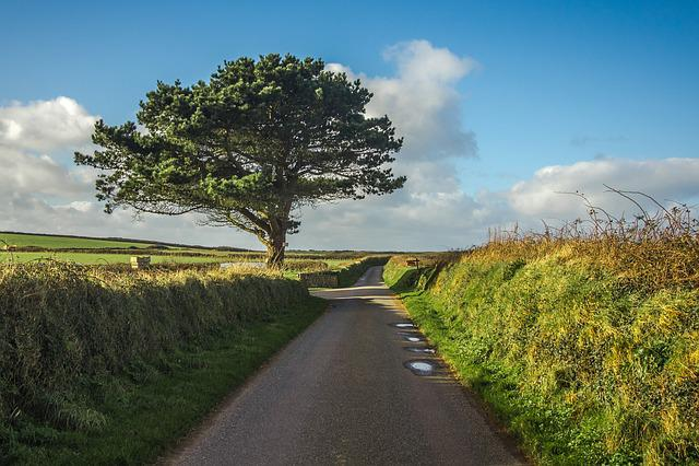 Tree Path Panorama 183 Free Photo On Pixabay