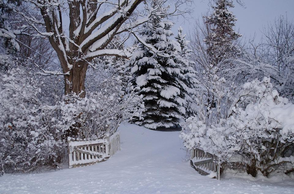 Winter Wonderland Snow · Free Photo On Pixabay