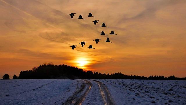 Free photo: Sunset, Winter, Snow, Cold, Birds - Free Image ...