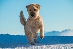 dog, jump, play