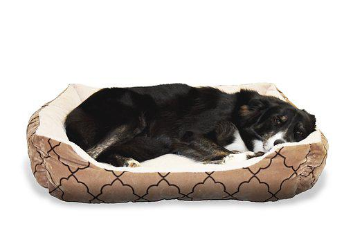 Dog Pet Bed Animal Border Collie Sleep Cut