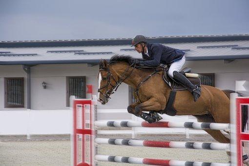 Cavalo, Jockey, Esporte, Animal, Corrida