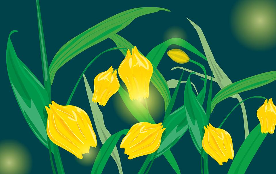 Fiori Gialli Scozia.Le Campanule Di Scozia Fiore Grafica Vettoriale Gratuita Su Pixabay