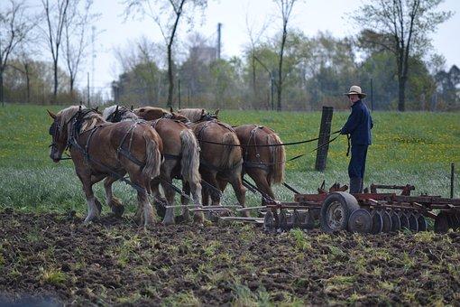 Horses, Mennonites, Man, Amish, Amish