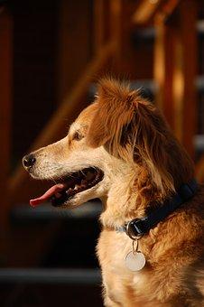 Dog, Animals, Cute, Trusting, Happy