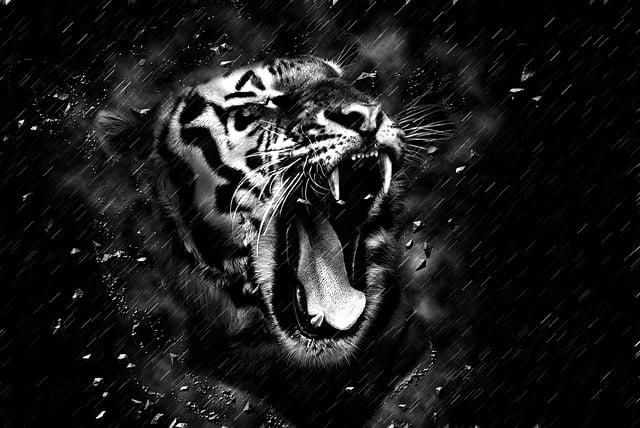 free illustration tiger head black and white free image on pixabay 1963828. Black Bedroom Furniture Sets. Home Design Ideas