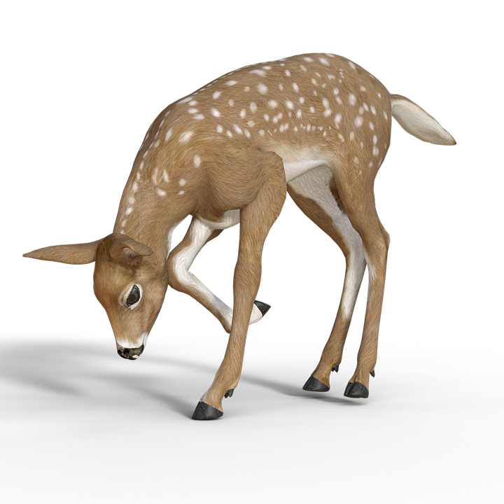reh bambi kitz junges  u00b7 kostenloses bild auf pixabay clipart of deer lying down clip art of deer eating crops