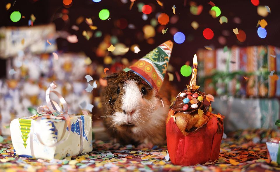 Guinea Pig, Happy Birthday, Animal, Domestic, Guinea