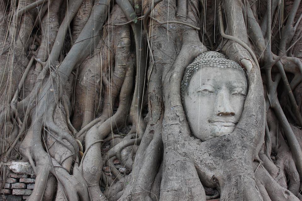 Ayutthaya, Boedha, Wortels, Thailand, Tempel, Beeld