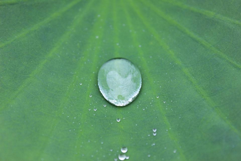 水滴, シート, 撥水加工, ドロップ, 雨, グリーン, 雨滴, 花びら, 水, 自然