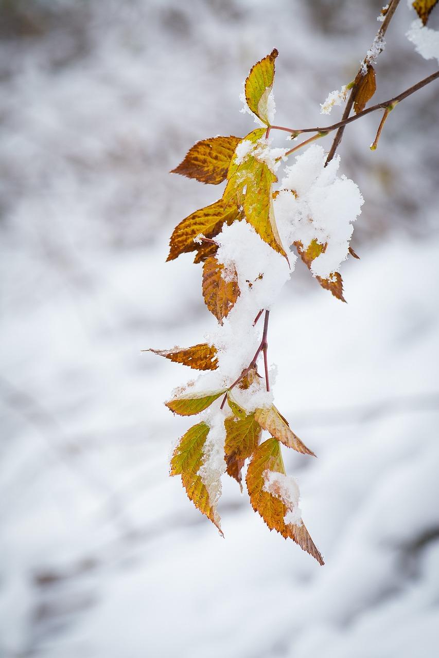 картинки листьев зимой возможно