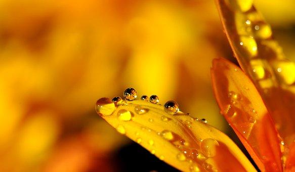 Drip, Blossom, Bloom, Yellow