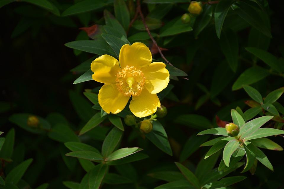 INDIGO DIY желтый один цветок анемона Орхидея Тюльпан 51