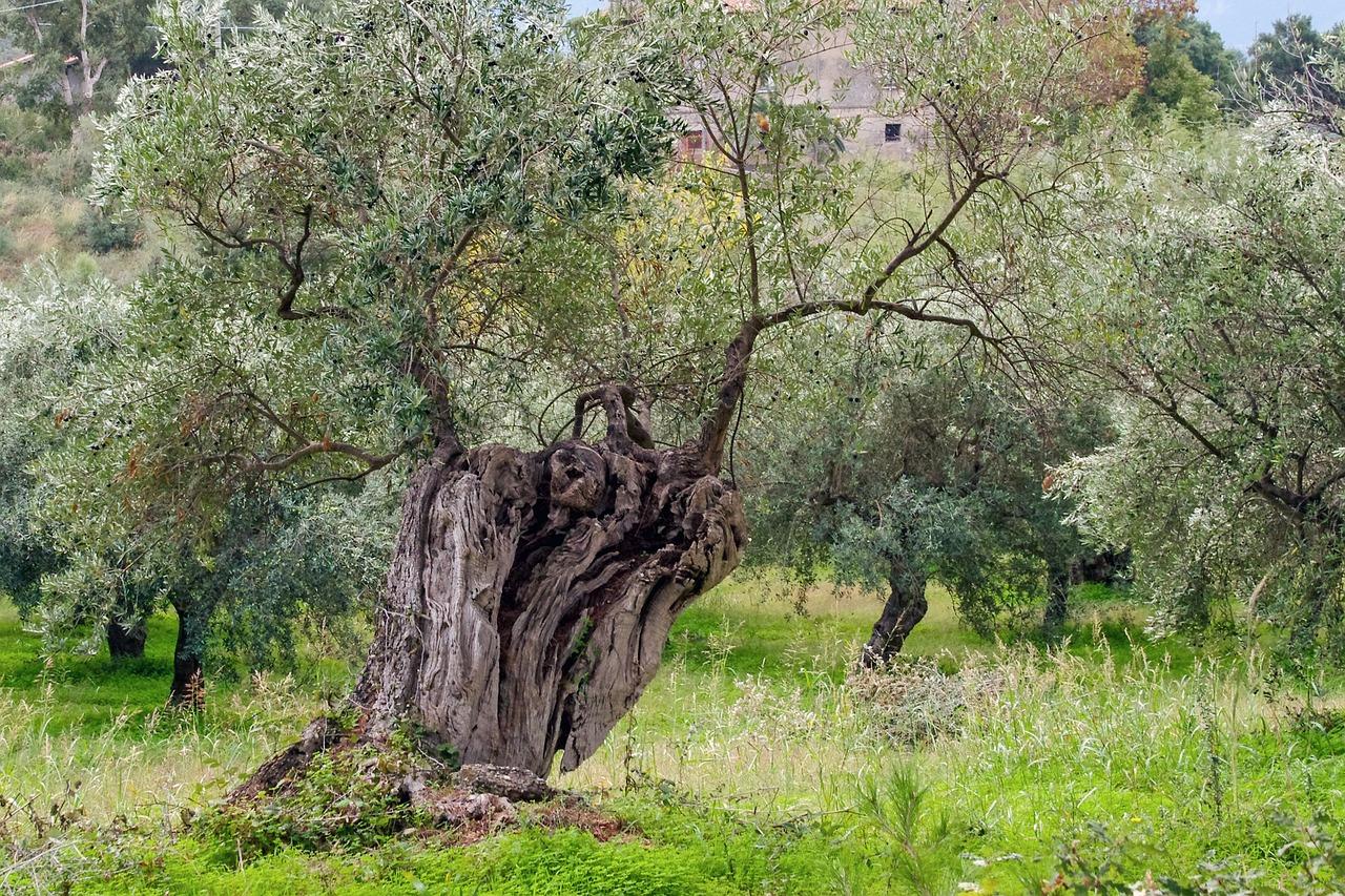 решили греческое дерево картинки нашем модельном