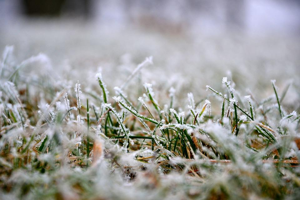 winter overseeding lawns in florida