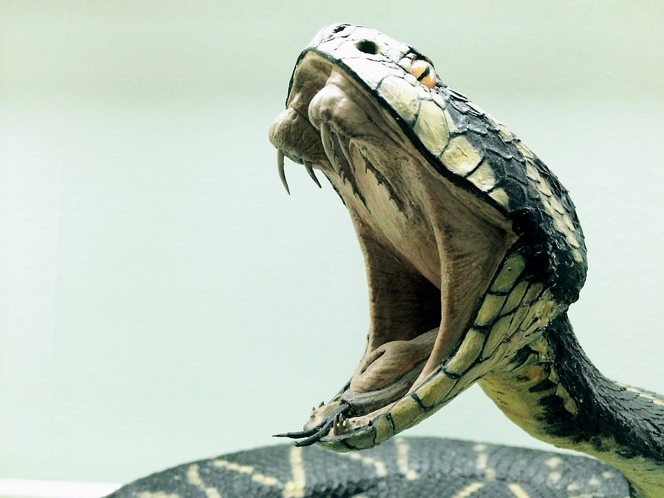 cobra-carnívora