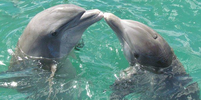 Dolphin Sea Love Kiss Dolphin Dolphin Dolp