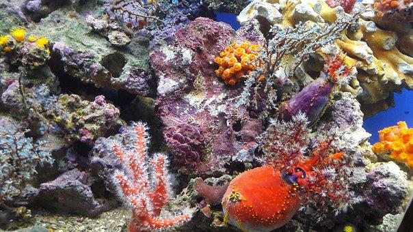Poisson, Aquarium, Océan