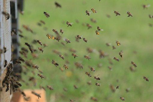 Bees Hive Beehive Honey Bees Work Beekeepi