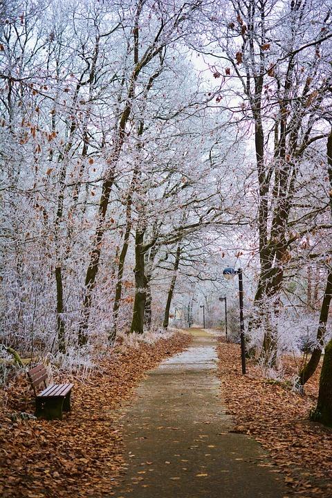 Winter Park Nature