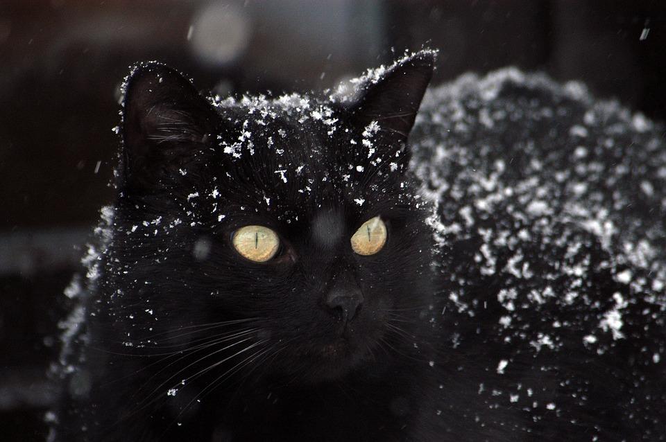 zdarma černá kočička zblízka