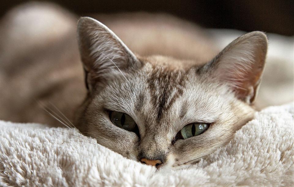 【衛生的かつお洒落】猫と一緒に暮らす人におすすめなカーペット15選