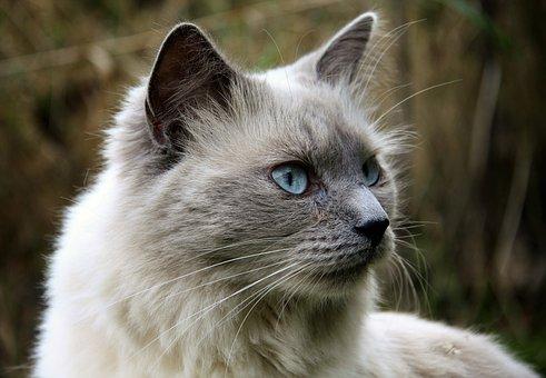 Katze, Tier, Katzenaugen, Tiere