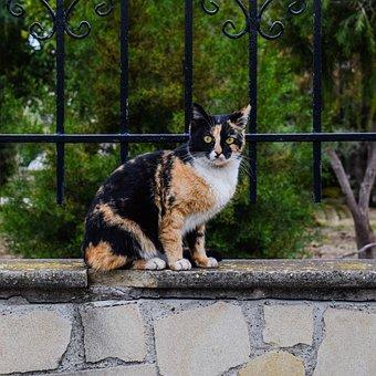 Cat, Stray, Curious, Surprised, Animal