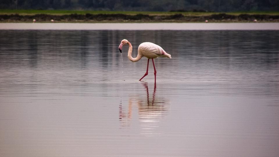 В Ларнаке началось строительство отеля с видом на Солёное озеро и фламинго
