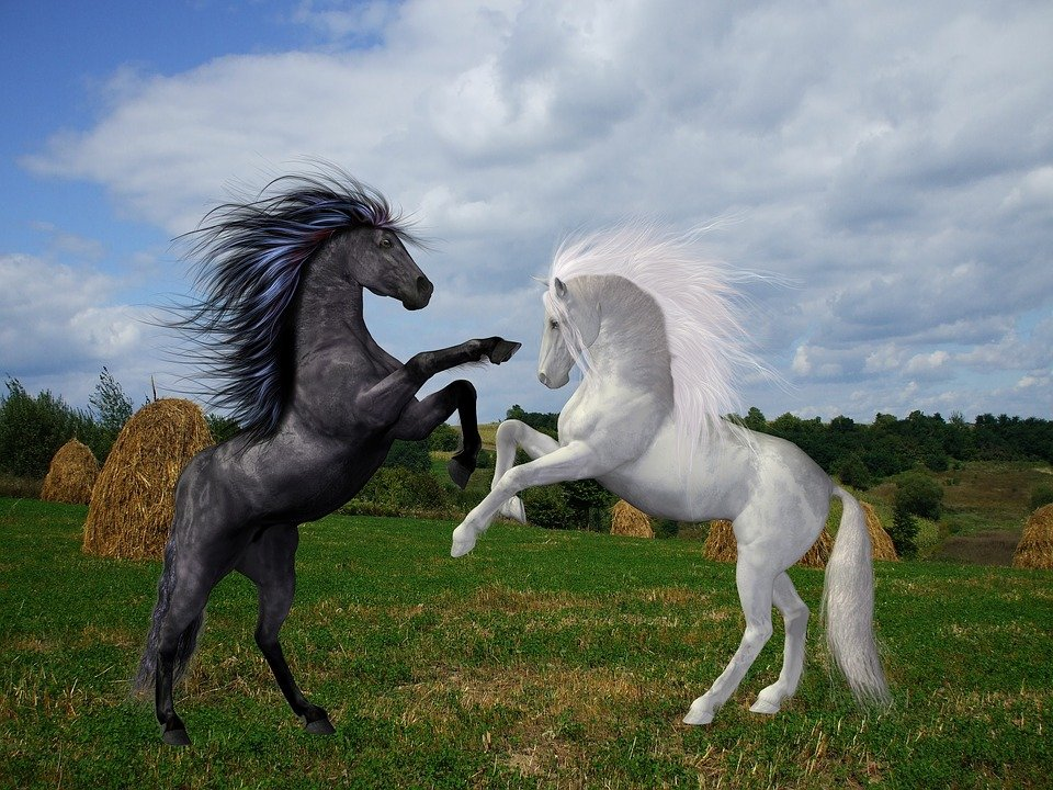 Chevaux Noir Blanc · Image Gratuite Sur Pixabay