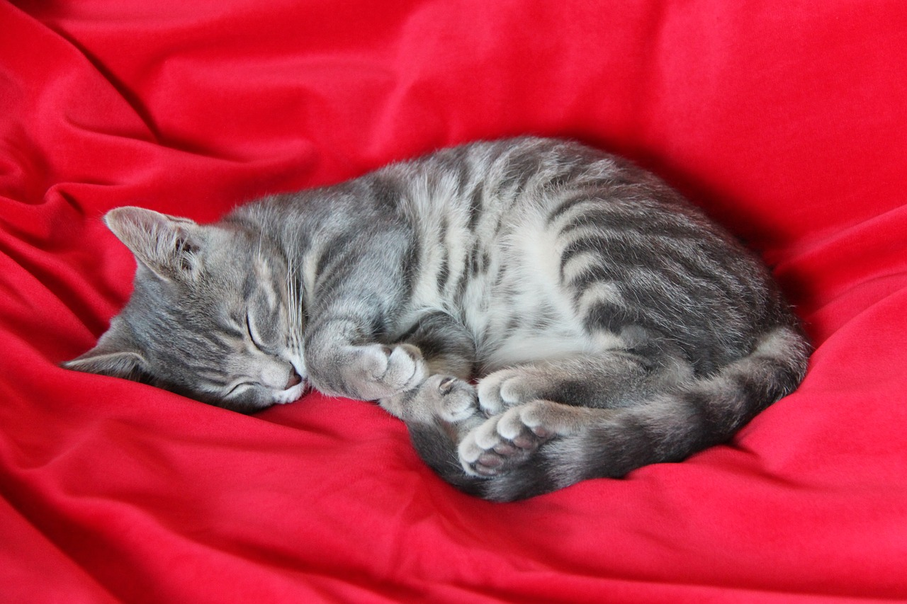 фото спящих серых котят ней