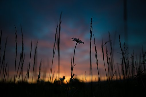 Sunrise Desktop Background Flower Sky