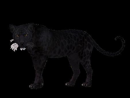 Leopard, Black, Attention, Face, Elegant, Memory