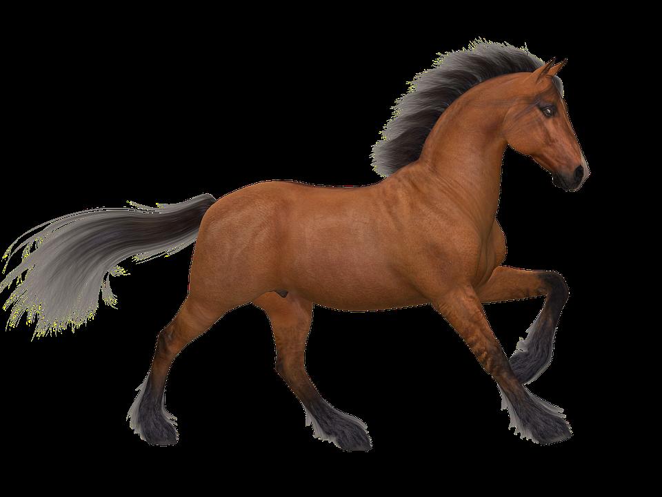 Caballo Ejecutar Marrón · Imagen Gratis En Pixabay