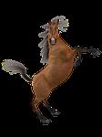 toon, horse