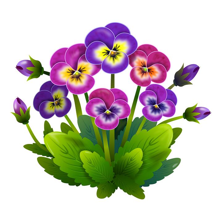 Panseluțe Flori Primăvară Imagine Gratuită Pe Pixabay