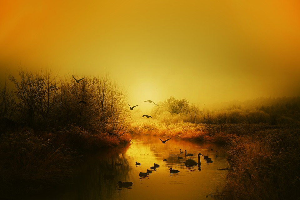 صورة لمجموعه طيور يحلقون فى المساء فوق بحيرة صغيرة