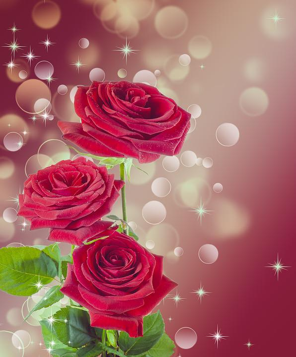 wallpaper heart rose