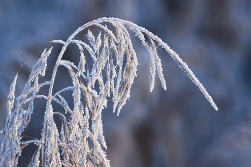 霜, 冬, 自然, 凍結, 今年の時間, 草, マクロ, 氷の結晶