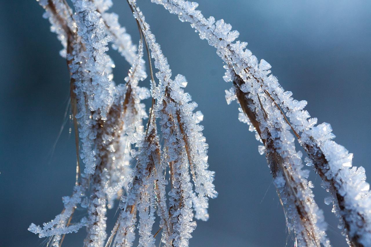 самое красивое фото зимней изморози инея помню, когда