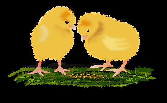 κορίτσια σκατά πουλί πορνό Έφηβος συλλογή
