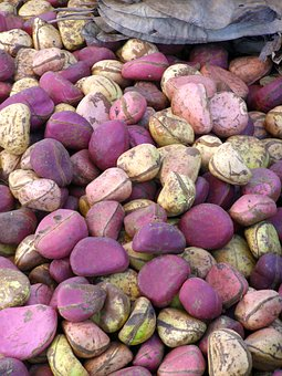 Mali, Nuts, Kola, Travel, Africa, Djenne
