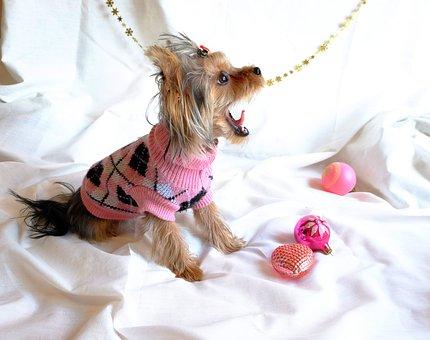 개, 요크셔 테리어, 새 해 전 야, 달링, 작은 개, 강아지, 각