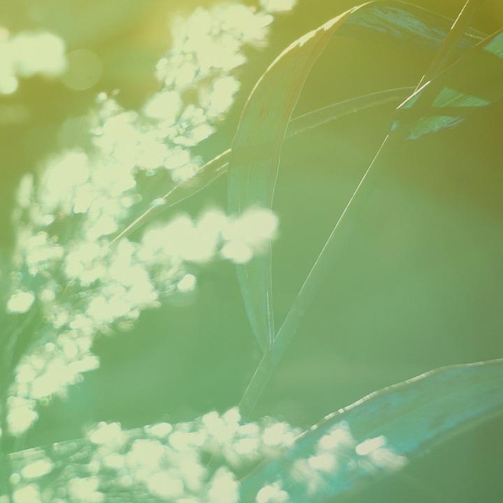 自然, 绿色, 稻草, 特写, 季节, 植物, 阳光, 开花