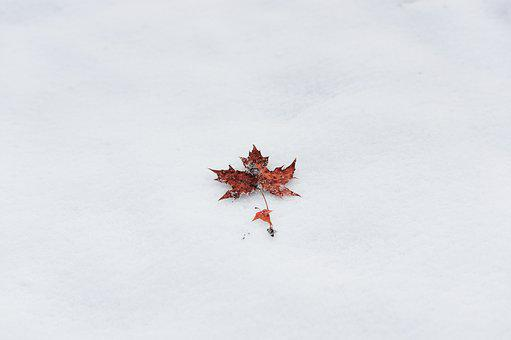 Winter Maple Minimalist Simple Ppt Backgro