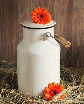 Milk Can, Gerbera, Flowers, White, Straw