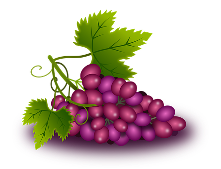 Grapes, Vine, Came, Wine, Orchard
