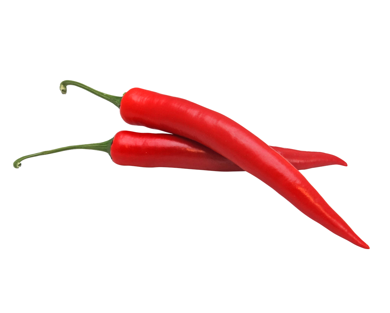 the insecticidal potential of chili pepper leaf extract against termites