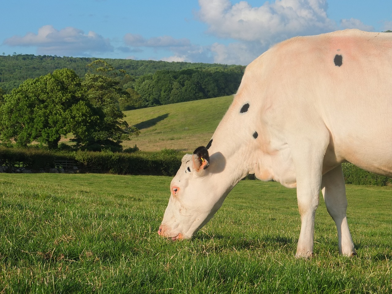 All effects - PhotoFunia: Free pic editor online with library Free photos of cows