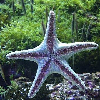 Monde Sous-Marin, Étoile De Mer